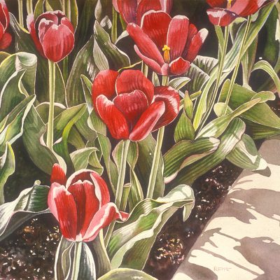 Spring Rubies by Shirley Kleppe