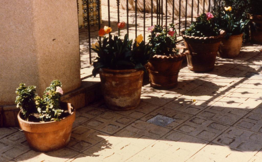 Flower pots in Tlaquepaque
