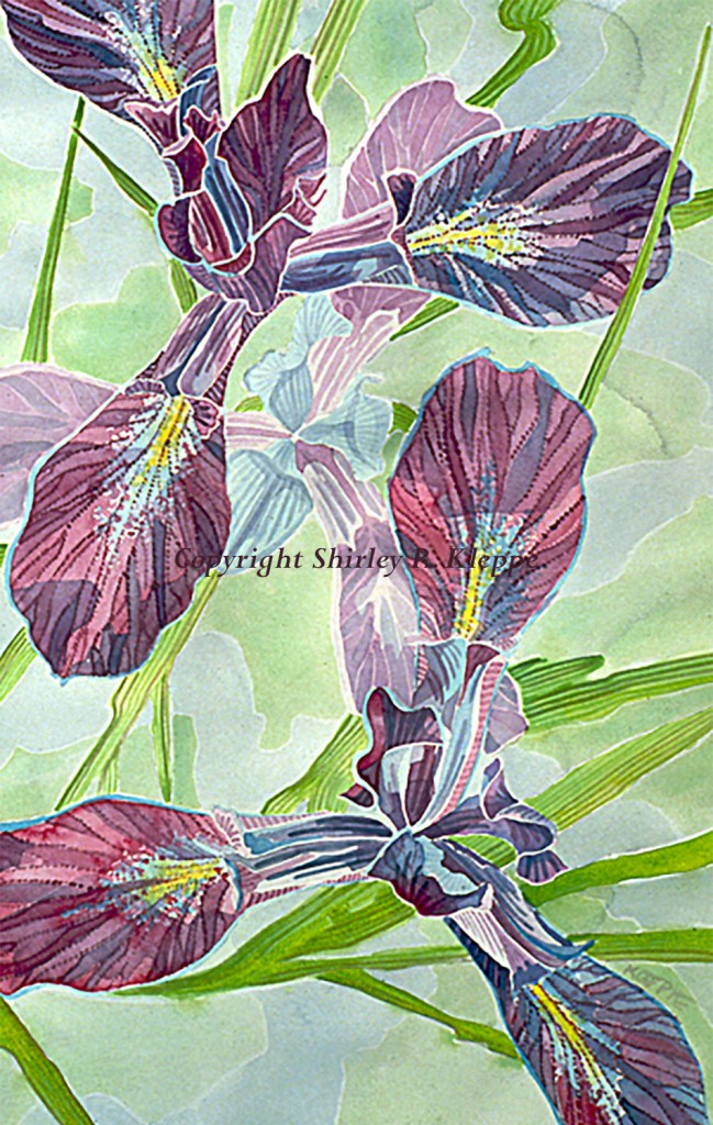 Iris Delicata - The Story Behind The Art