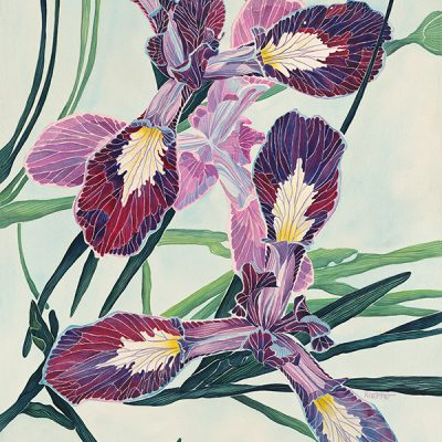 Skylight Iris by Shirley Kleppe